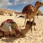 Lass dein Kamel niederknien